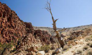 Jordanië Dana Natuurpark Wandelen