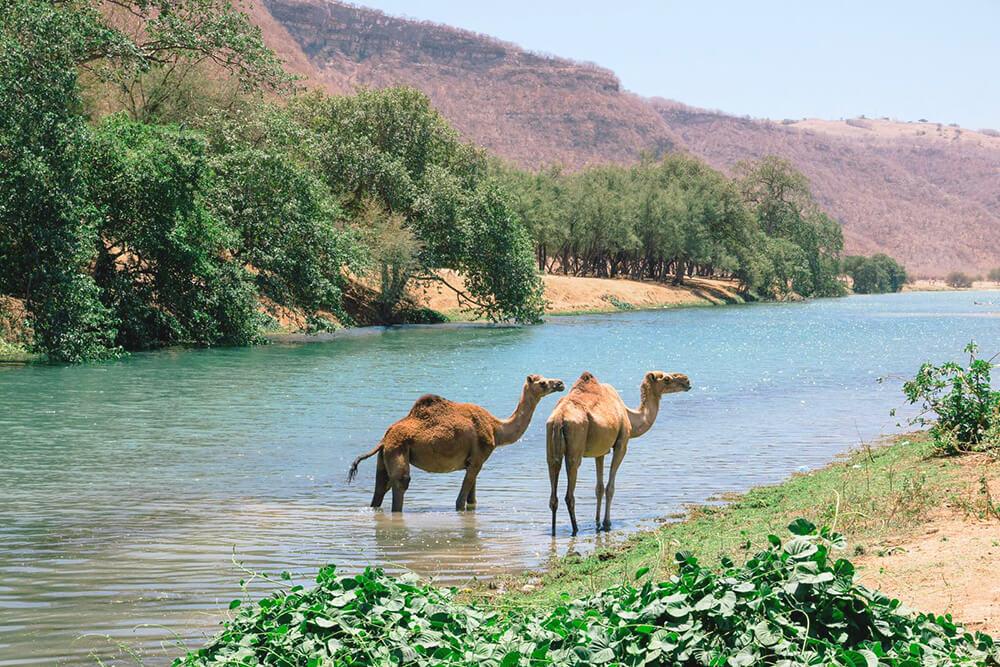 5 dingen die je nog niet wist over Oman