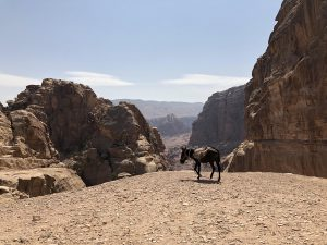 Jordanië Petra Uitzicht Tijdens Hike