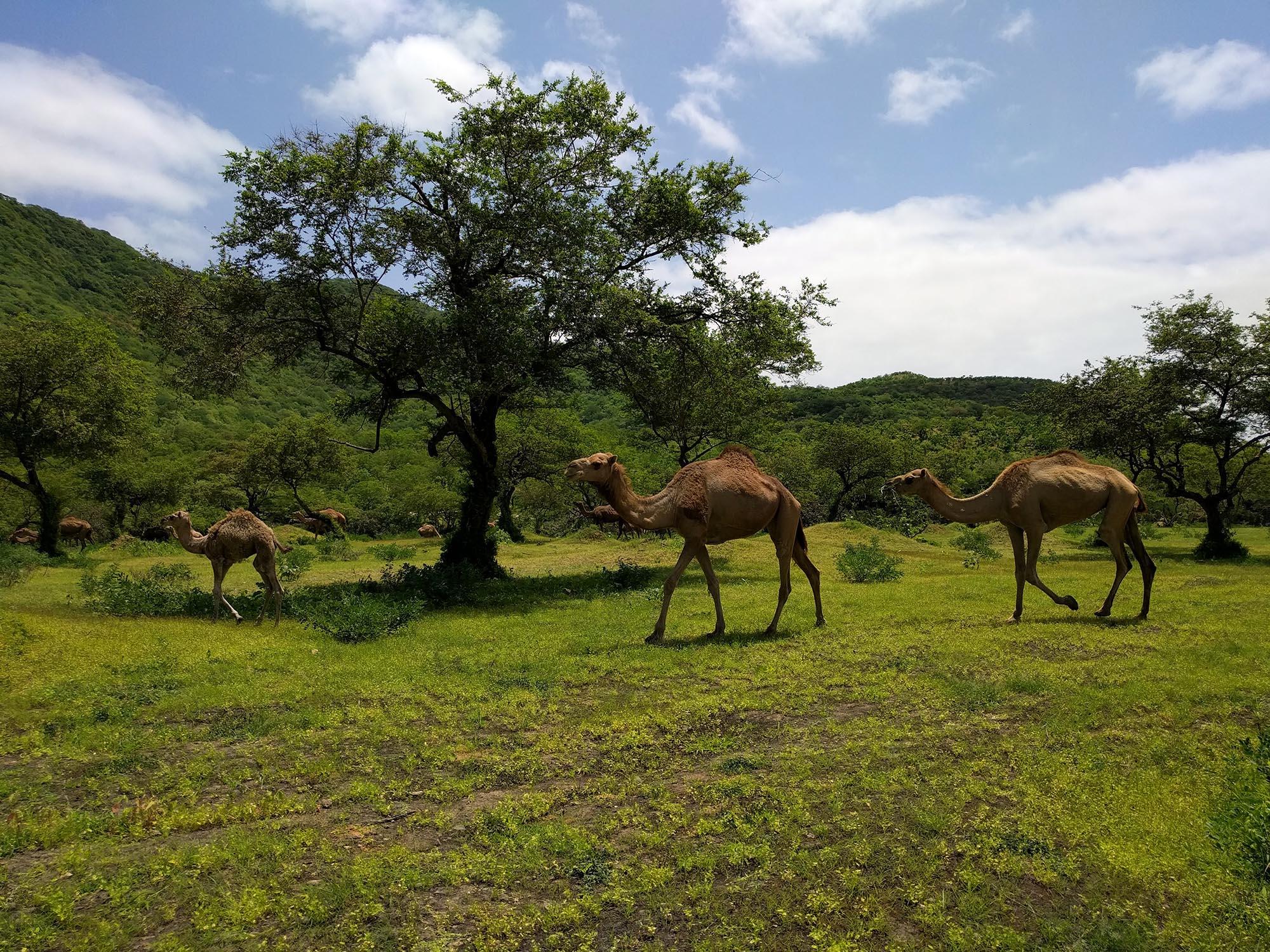 Ontdek Oman in de zomer