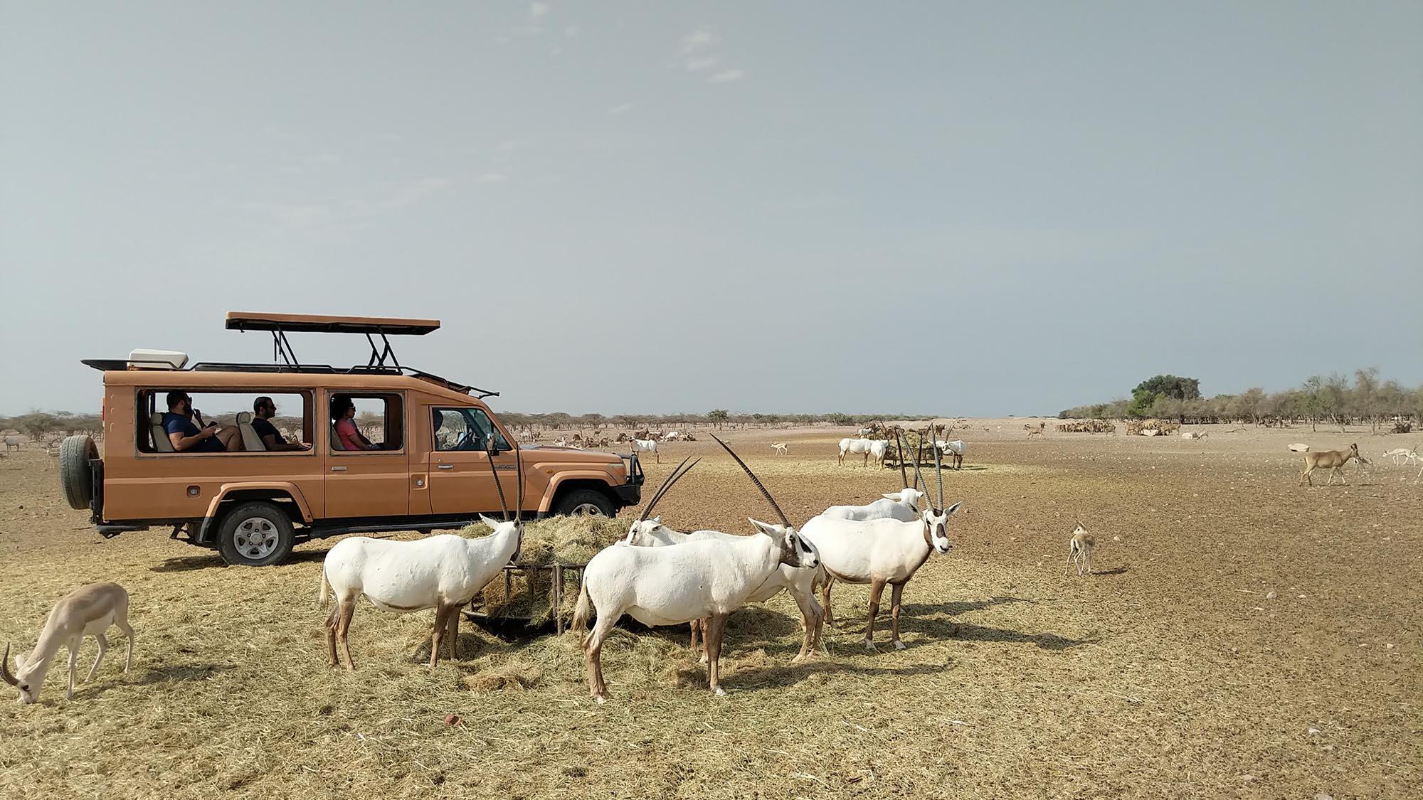 Sir Bani Yas Reserve