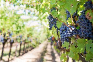 Israël Wijngaard