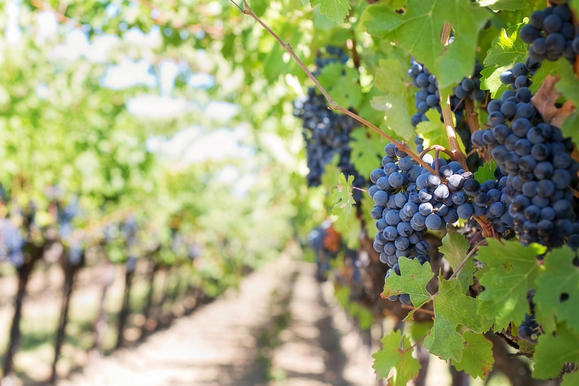 Wijnreis Israël