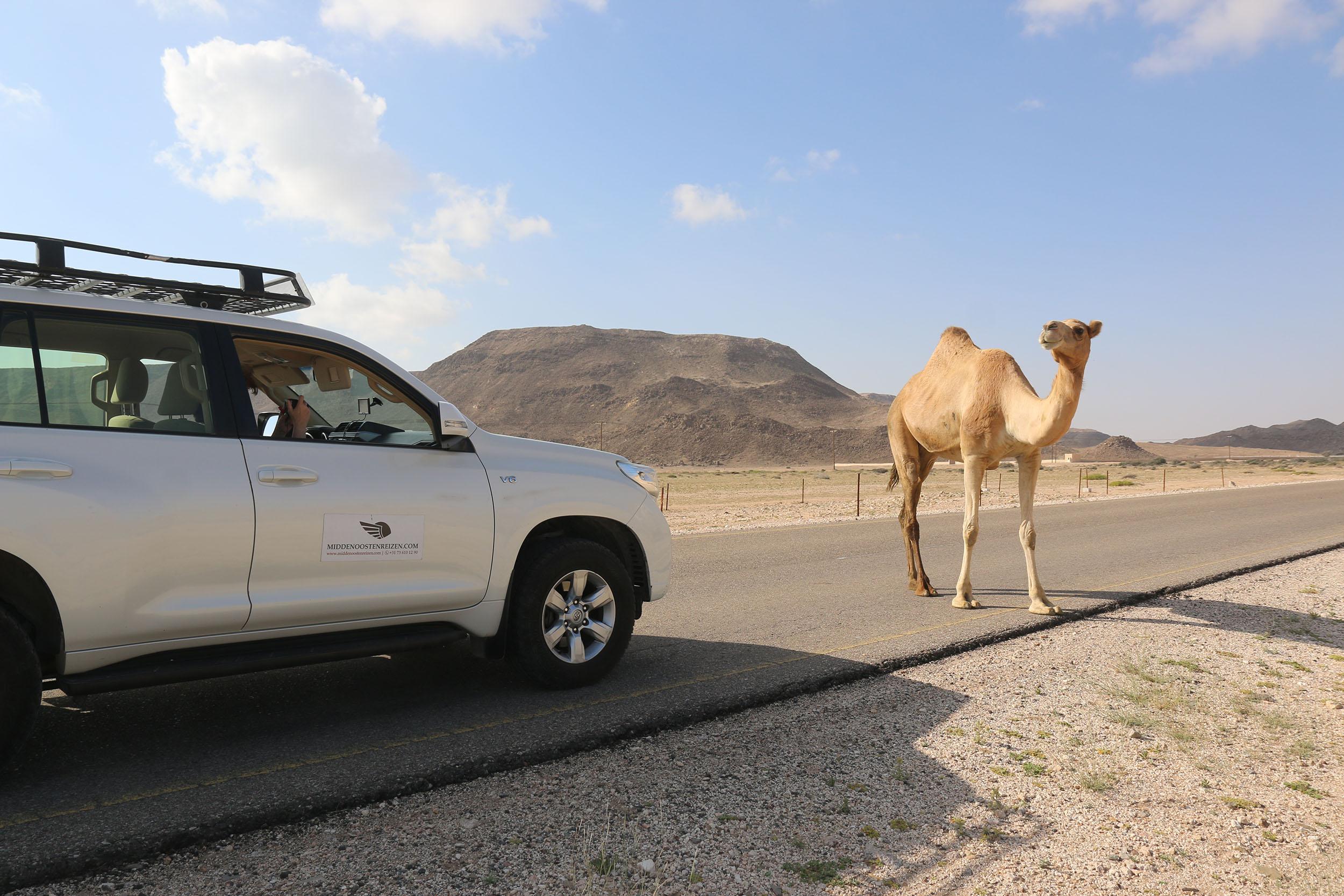 Treed in de voetsporen van Aladdin en Sindbad in Oman