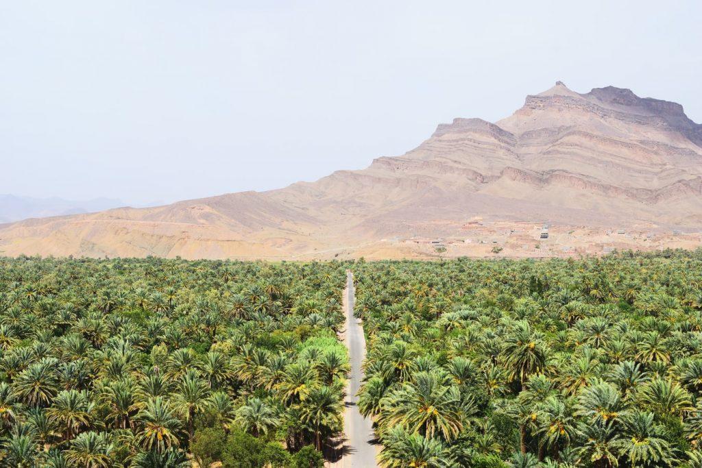 De groene omgeving van de Draa Vallei in de Anti Atlas
