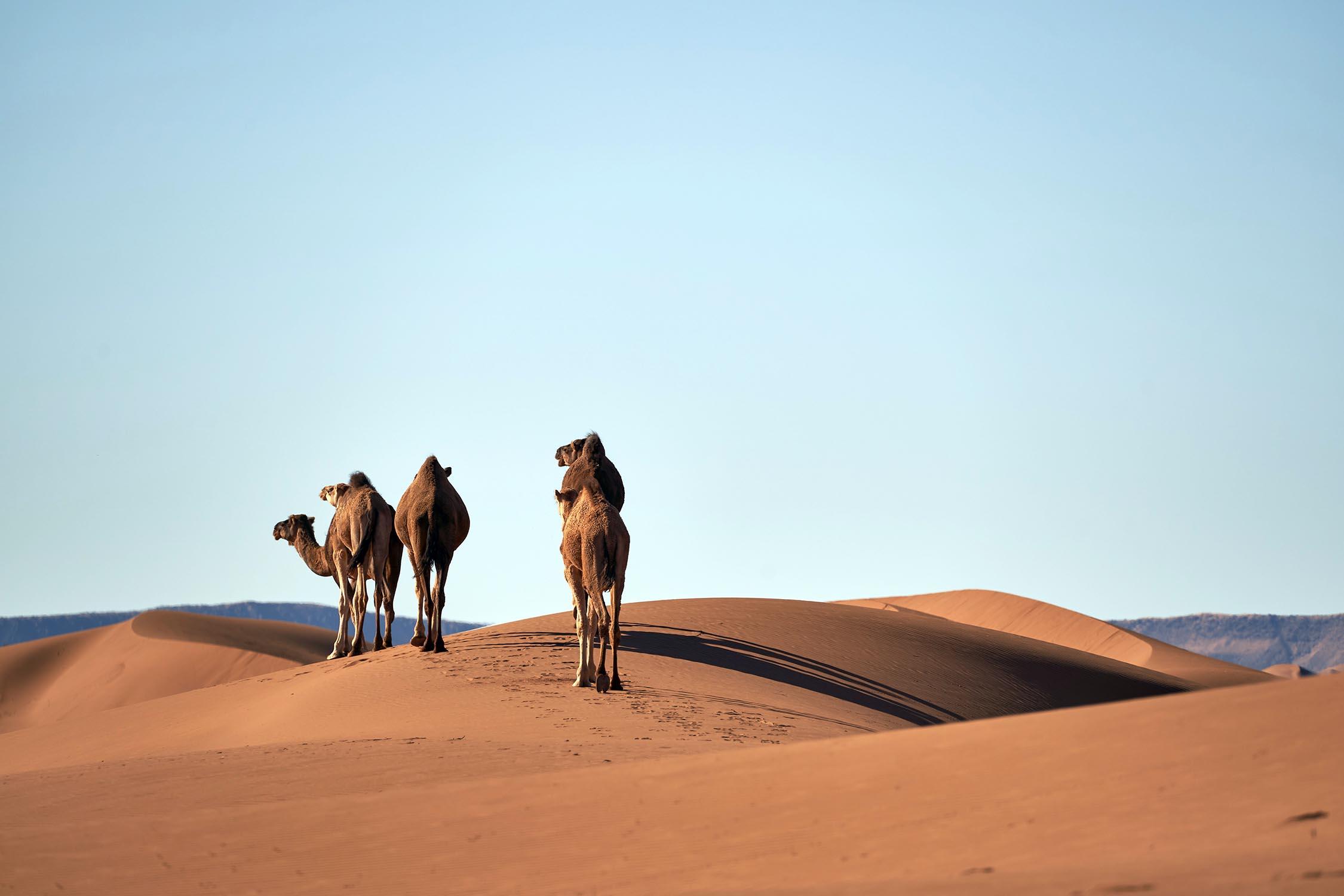 Reizen door meerdere landen naar het Midden-Oosten